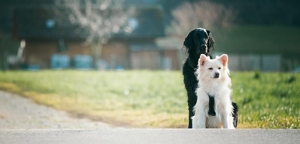 AMA Hundesport Rikon